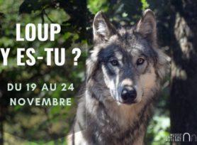 Loup y es-tu _